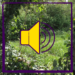 Audio-Dateien zusammenführen auf dem Windows-PC mit Audacity - Tutorial. #digitaleLehre #Audioaufnehmen #Podcast